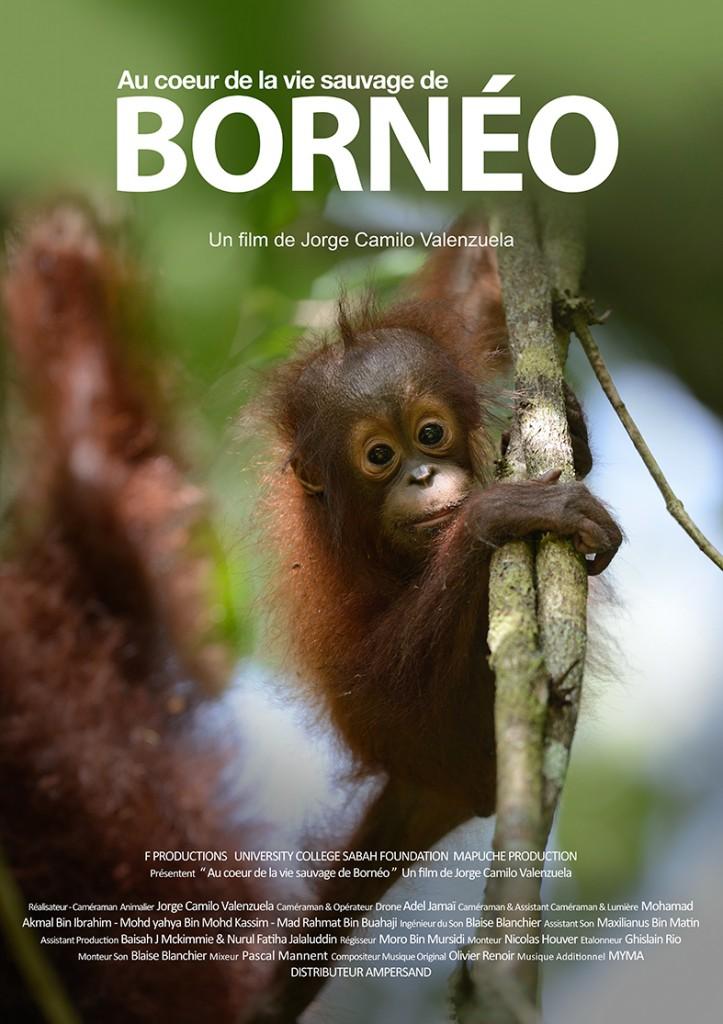 Affiche FILM Borneo FR